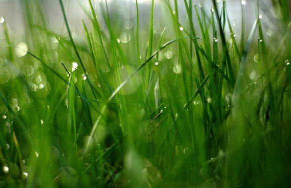 Jak dbać o ogród w czasie suszy?